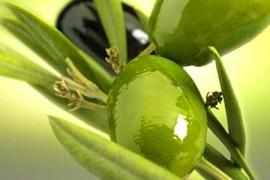 olive.olio