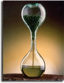 olio d'oliva extravergine 12